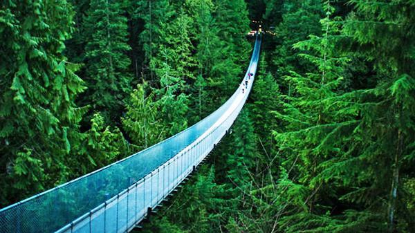 suspendedbridge