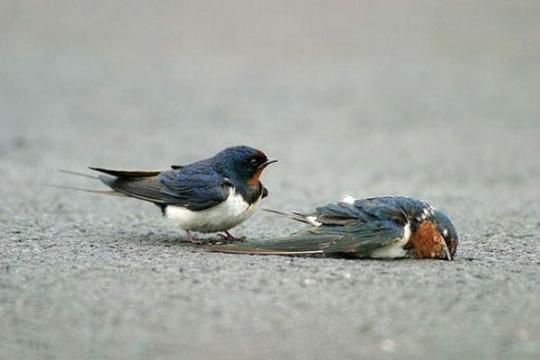 sparrow03