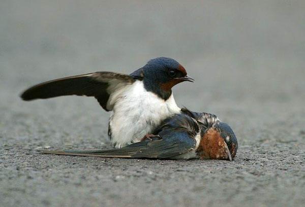 sparrow04