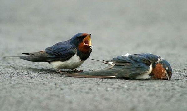 sparrow05