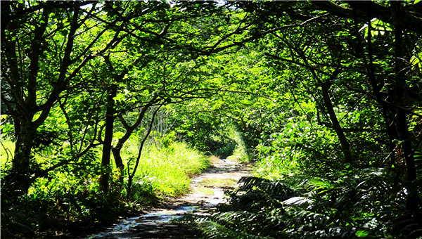 """A beautiful trail that will not end happy. No more """"Happy Trails"""" here once mining starts"""