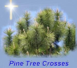 Pintreesateaster
