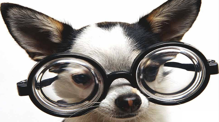 Funny Doggie With Glasses