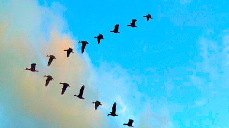 birdsinformation