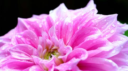 ChrisChung_Flowers 002