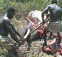 African-poachers