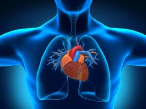 human-body-heart-130925