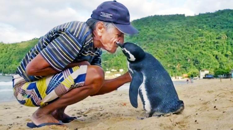PenguinTrueStory001
